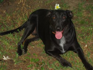 Dido_the_dog