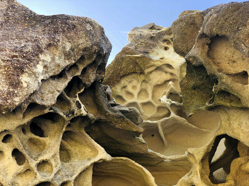 Wind-carved sandstone near the beginning of the Sculpture by the Sea walk.